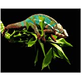 TWEN-520 Malen nach Zahlen DIY 40x50cm Grüne Eidechse auf Zweig Tier Leinwand Hochzeitsdekoration Kunst Bild Geschenk