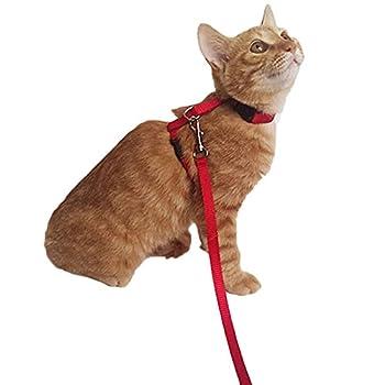 Harnais en nylon réglable pour chats, avec laisse et collier