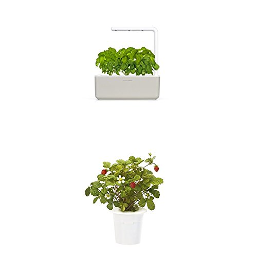 Click & Grow Smart Garden 3 jardinière d'intérieur 30 x 10 x 28 cm beige (contient 3 capsules de basilic) + 2 recharges fraise (x3)