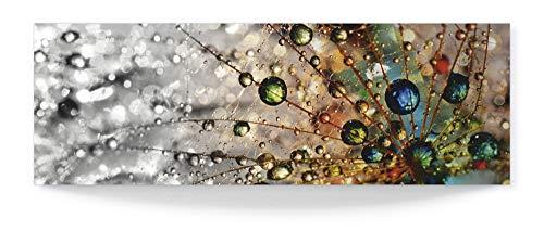 Artland 3D Wandbild aus Alu Bild gebogen Alubild einteilig 120x40 cm Querformat Natur Botanik Blumen Pusteblume Wassertropfen Modern Abstrakt T9IN