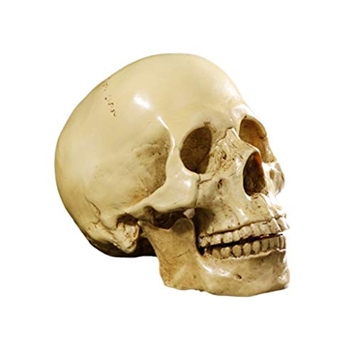 Life Size 1:1 Replica Realistic Human Anatomy Skull Gothic Halloween Decor Ornament Anatomical Medical Teaching Skeleton (Yellow)