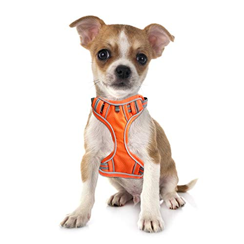 Dog Harness, no Pull PET Strap (with 2 Belt Clips), Adjustable Padded Dog Vest, Waterproof Reflective Non Blocking pet Oxford Vest (Easy to Put on and take Off) (Orange, Medium)