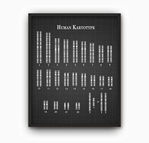 Rac76yd Menselijk Karyotype Print X Y Chromosomen Genetische Code Aminozuur Eiwitten DNA RNA Genetica Moleculaire Biologie Biochemie Wetenschap Student