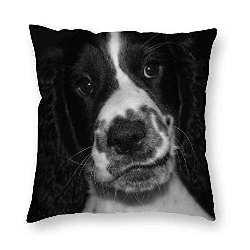 YY-one Polyester Cotton Christmas Home Decorative Pillow Covers Springer Spaniel, Dog Throw Pillow Case Cushion Cover Home Decor,Square 20X20 Inches