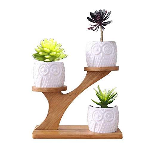 MINGZE Vaso di Piante grasse in Ceramica Gufo 3 Pack per Home Office Desk (con Supporto in Legno), Vaso di Fiori in Vaso Combinazione succulenta, Vaso in Ceramica succulenta