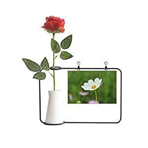 OFFbb-USA Pure White Cosmos Art Deco Gift Fashion Artificial Rose Flower Hanging Vases Decoration Bottle