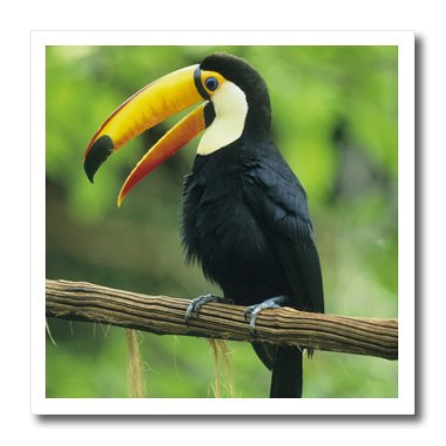 3dRose ht_85574_2 Toco Toucan, Tropical bird, Iguacu Falls NP, Brazil - Kevin Schafer - Iron on Heat Transfer for White Material, 6 by 6-Inch