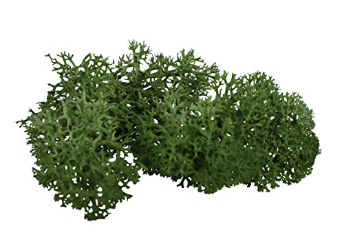 sphagnum-shop.com Echte Rentierflechte in Waldgrün 200 gr für Modellbau Basteln Deko dunkelgrün