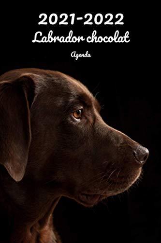 2021-2022 Labrador chocolat Agenda: Hebdomadaire et Mensuel   A5, 152 Pages   26 Mois   Planificateur & Organiseur   Calendrier   Journal   En Francais   Chien