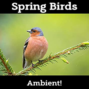 Spring Birds and Relaxing Nature - 30 Amazing Melodies