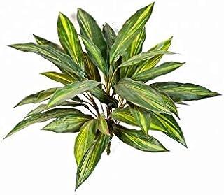 artplants.de Arbusto Artificial de Drácena con Vara de Ajuste, 35 Hojas, Amarillo-Verde, 50cm - Mata Decorativa - Planta sintética