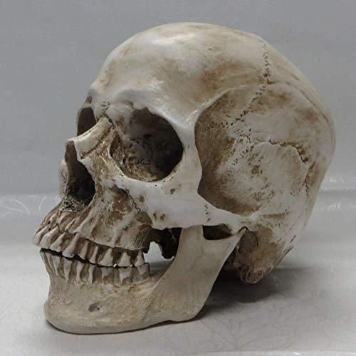SBDLXY Rplica de la Estatua del crneo Humano, Espeluznante decoracin de Halloween estatuilla Escultura Sonriente Resina Realista decoracin para el hogar Escritorio crneo Arte Adornos-b 19x14x1