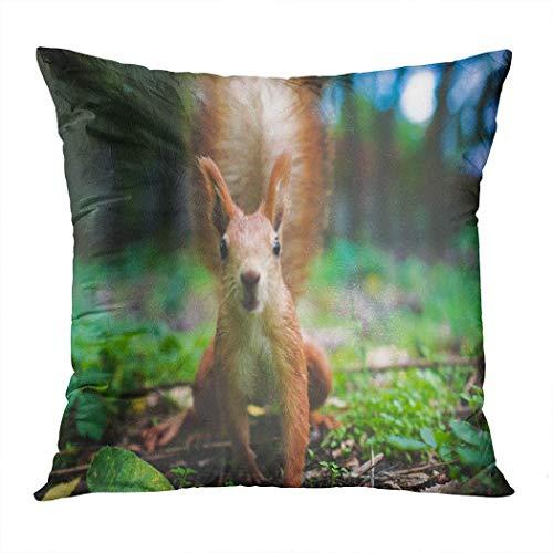 Funda de almohada, ardilla se ve en la cámara, animal rojo naturaleza salvaje, funda de almohada de viaje para decoración al aire libre, 45 x 45 cm