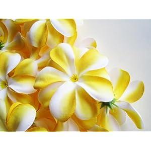 (12) Yellow White Hawaiian Plumeria Frangipani Silk Flower Heads – 3″ – Artificial Flowers Head Fabric Floral Supplies Wholesale Lot for Wedding Flowers Accessories Make Bridal Hair Clips Headbands Dress