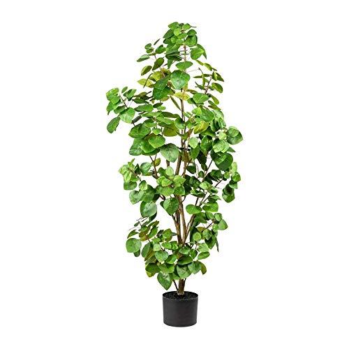 Pflanzen Kölle Künstlicher Eukalyptus, dekorativ, grün, ca. 120 cm, mit Topf