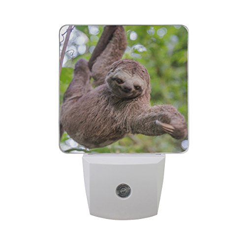 Naanle Set Of 2 Sloth Hanging Tree In Jungle Forest Auto Sensor LED Dusk To Dawn Night Light Plug In Indoor for Adults