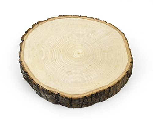 Wilson Basswood Round Thick (Medium (7-9 inch Wide x 1 5/8 inch Thick))