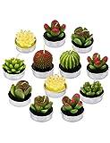 ZCBHSD Velas de Cactus suculentas Velas de candelita Creativas Lindas Mini Plantas suculentas Velas para cumpleaños, Regalos de San valentín, Fiesta, Boda, SPA, decoración del hogar
