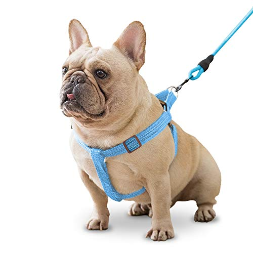 Mascretta Dog Harness and Dog Leash Set. Comfortable Pet Harness for Small and Medium Dogs. No Pull Dog Harness. Puppy Vest for Walk. Perfect Training Leash Set. Arnes y Correa para Perro. (Blue, XS)