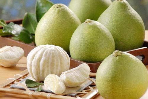 Portal Cool Bestes Original 10 Samen Big Pomelo Baum Bio Citrus High Quality Seed