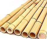 Caña de bambú amarilla, Moso, blanqueado, 2,8-3,5cm, longitud 200cm