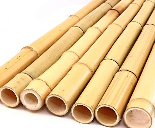 1x Bambusrohr gelb, Moso Bambus Gebleicht mit Durch. 2,8-3,5cm, Länge 200cm - Kletter Hilfe für Garten Rankhilfe