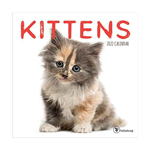 TF PUBLISHING - 2022 Kittens Mini Calendar - Home and Office Organizer - Monthly Grid Space for Planning and Schedules - 4 Bonus Months - 7