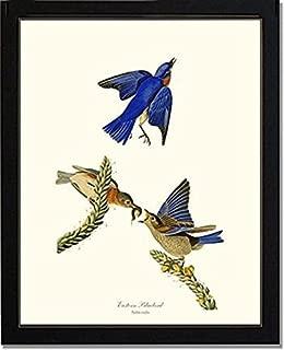 Best bluebird art sound Reviews