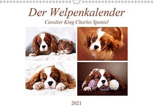 Der Welpenkalender - Popular popular Cavalier Wandkalender King Charles All items free shipping Spaniel