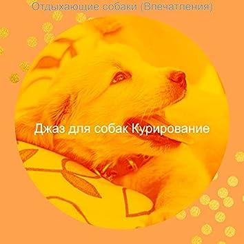 Отдыхающие собаки (Впечатления)