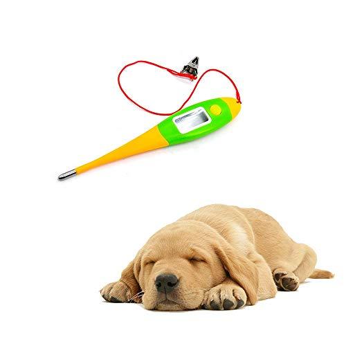 QNMM Termómetros para Mascotas, termómetros médicos Profesionales Termómetro Digital clínico para Animales