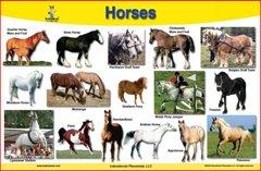 Brainymats - Kids Placemat -(Horses)
