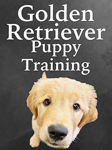 Golden Retriever Puppy Training
