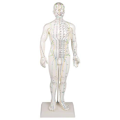 Akupunkturfigur männlich 45 cm, Anatomie Modell, Anatomische Lehrmittel