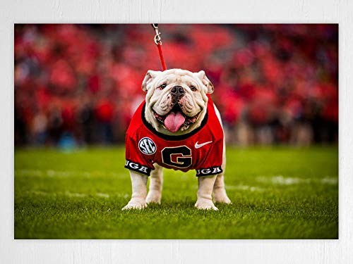 UGA Georgia Bulldogs: UGA X Mascot Photo Art Poster (Large: 18'x24')
