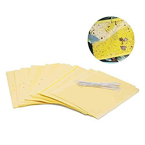 Plai 30 Fogli MoscheTrappola(giallo 20 x 25 cm), Trappola Bi-adesiva per Insetti, Mosca Bianca , Mosca della Frutta , Afidi, Minatori Fogliari, Cicaline