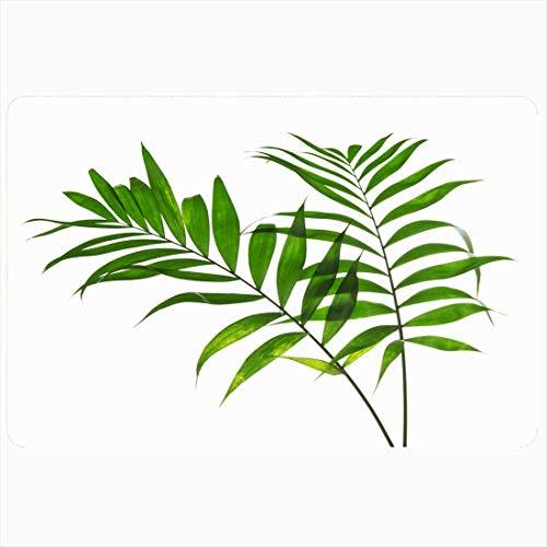 Tapis de bain Feuille de botanique Deux grandes feuilles vertes Howea Nature Palm ajouré Fronde d