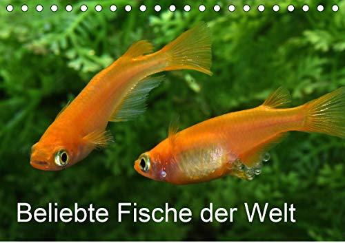 Beliebte Fische der Welt (Tischkalender 2021 DIN A5 quer)