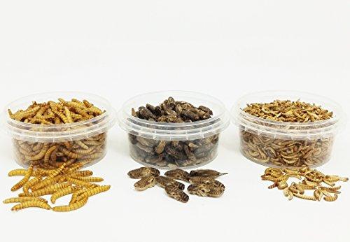 Insekten-Probierpack S - Mehlwürmer, Buffalowürmer, Grillen - 28g