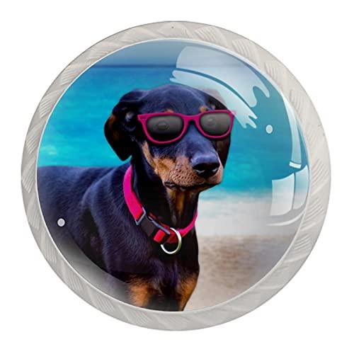 Tirador de la perilla del cajón 4 piezas El cajón del gabinete de vidrio de cristal tira las perillas del armario,perro doberman en gafas de sol rosas