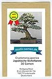Bonsai - Cryptomeria japonica - Japanische Sicheltanne...
