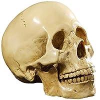 等身大人間の頭蓋骨黄色モデル1:1レプリカ解剖学のためのレプリカ樹脂彫刻医療追跡教育スケルトン像ハロウィーンファッション