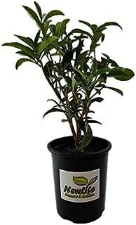 plant for life nursery