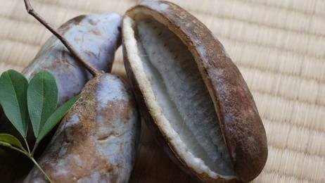 Schokoladenwein Akebia Quinata 5 Samen