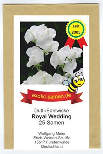 Edelwicke - Duftwicke - Bienenweide - Royal Wedding - herrlicher Duft - bis 180 cm - 25 Samen