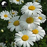 GEOPONICS Acquista piretro semi di fiore 120pcs seme repellente Fiore Piretro