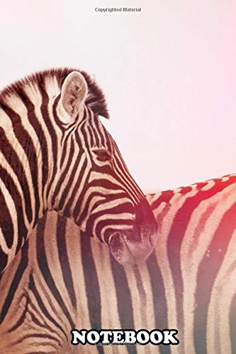 Notebook: Zebra , Journal for Writing, College Ruled Size 6