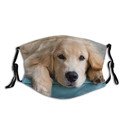 Golden Retriever Look at Unsex Dustproof Adjustable Earloop Mouth Balaclava Face Protection Cover Cotton with 2 Filters for Cycling Travel Outdoors
