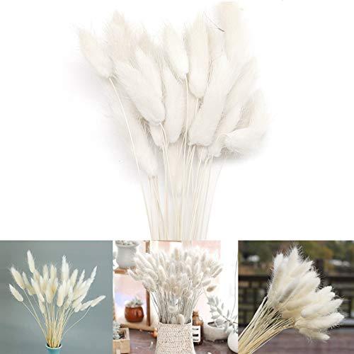 hierba de pampa seca,hierba de pampas,grass secas para decoración del hogar,pampas grass decoracion,hierba de pampas para decoración de jardín (blanco)