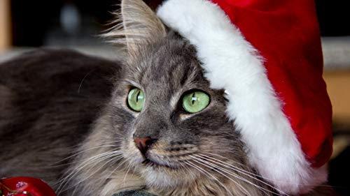 JZDTMMAN DIY MalenNachZahlen Katze Mit Weihnachtsmütze Erwachsene Kinder Zeichnen Anfänger Ohne Rahmen Wohnkultur Geschenke 40x50cm